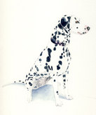 'Ricky' the Dalmation