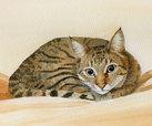 'Puss-E-Cat'