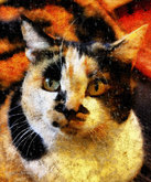'Lilly' the Calico Cat
